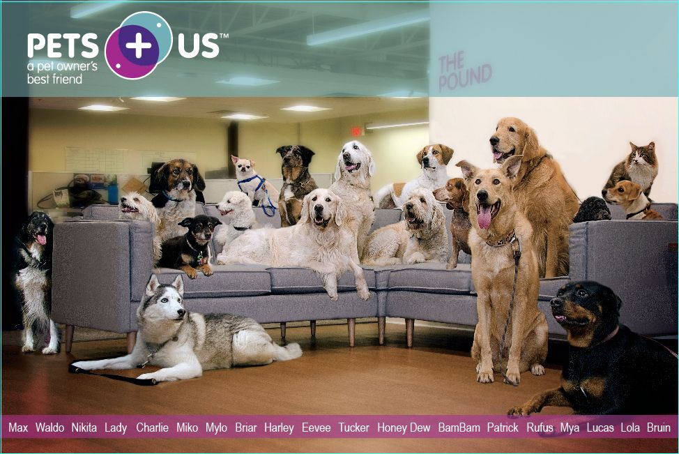 Meet the Pets Plus Us office pets! Can you find Bruin, the