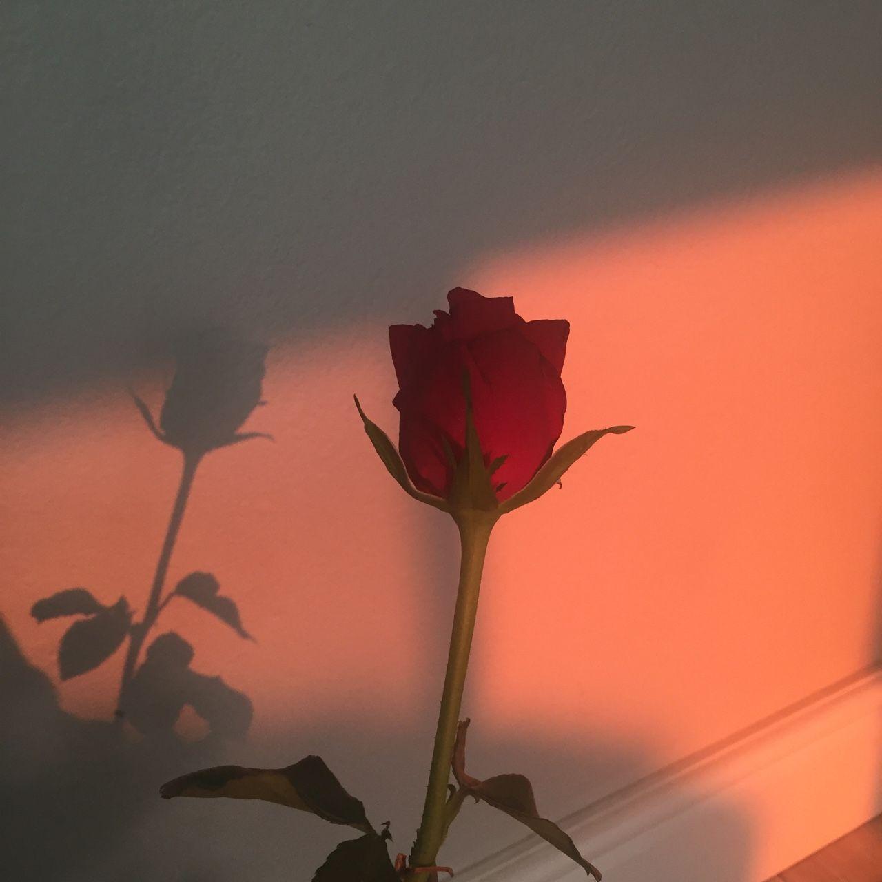 Pin By Emilee Mari On Blossom Aesthetic Roses Flower Aesthetic Red Aesthetic