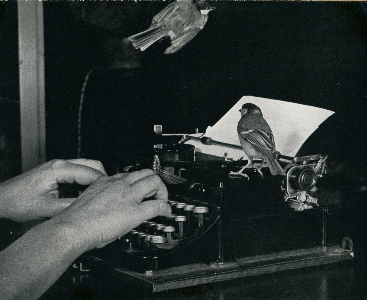 len howard   Tumblr   I like birds, My pictures, Bird stand