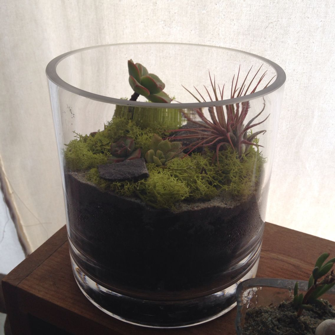 My Garden Grows Terrarium by Emma MankinMorris Terrariums