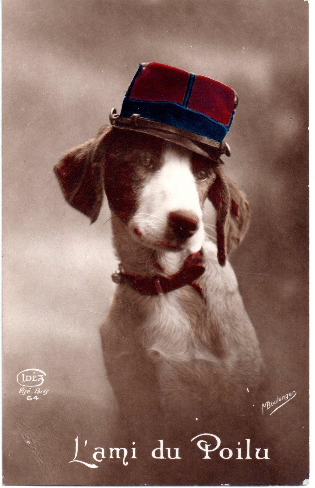 l 39 ami du poilu adorable carte postale repr sentant un petit chien portant une casquette de. Black Bedroom Furniture Sets. Home Design Ideas