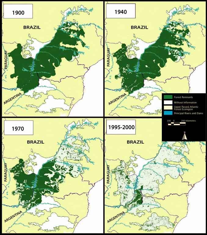 Shocking Images Of Deforestation Rainforest Project