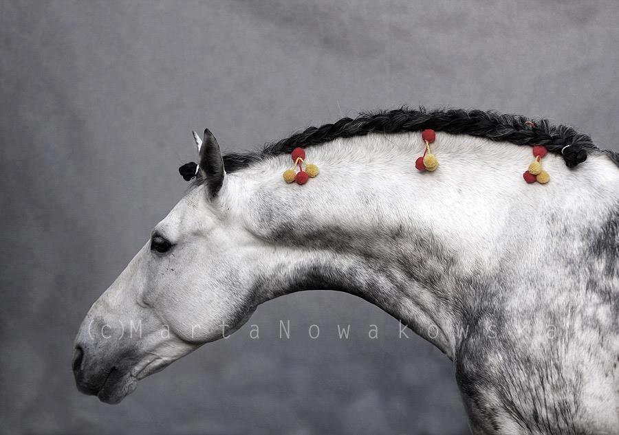 Curve. Photo by Marta Nowakowska, horse owned by Blanka ...