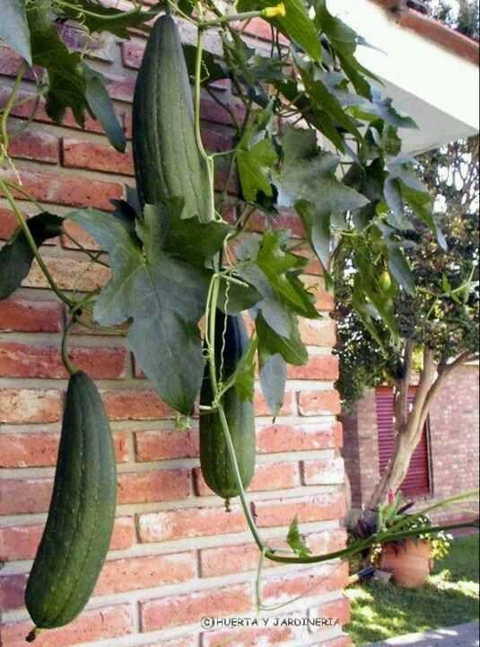 Los Conoces Ricos Pastes Para Bañarse Para Tallar La Piel Plants Plant Leaves Nicaragua