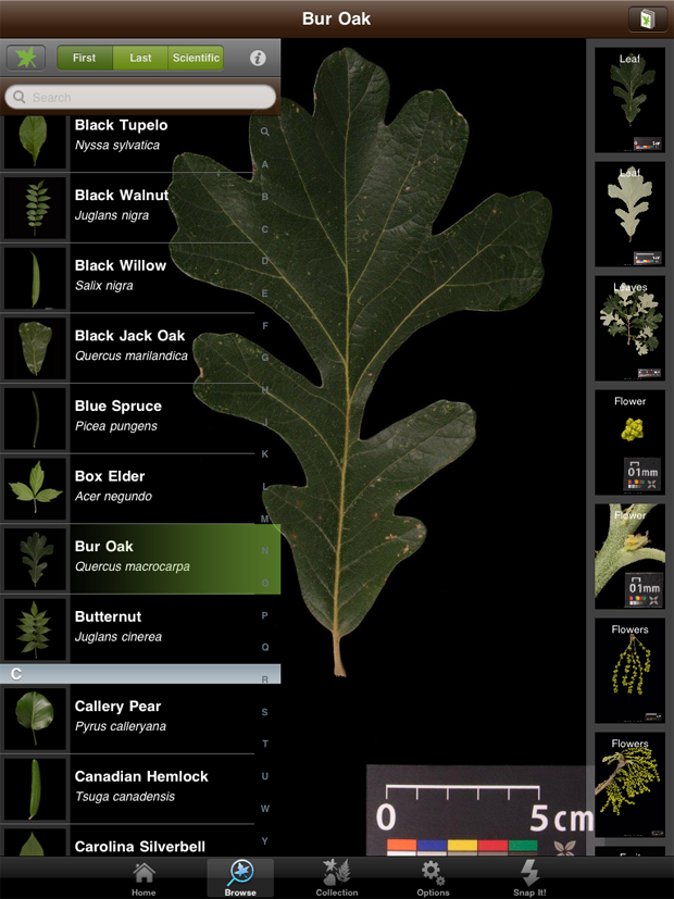 Leafsnap combines biometrics and botany for electronic