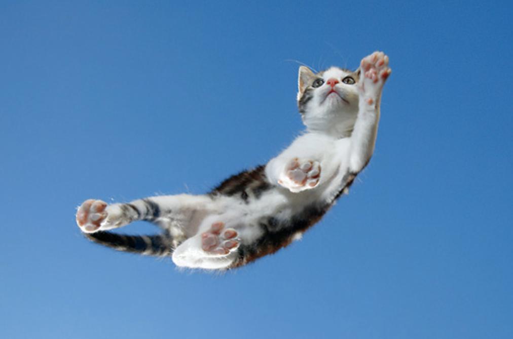 Sky Cat Flying Cat Tabby Kitten Cat Lovers Cute Cats