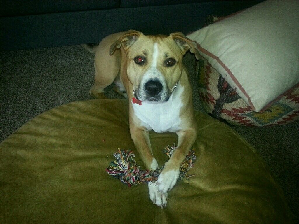 looking for a dog sitter? Check me out at https//www