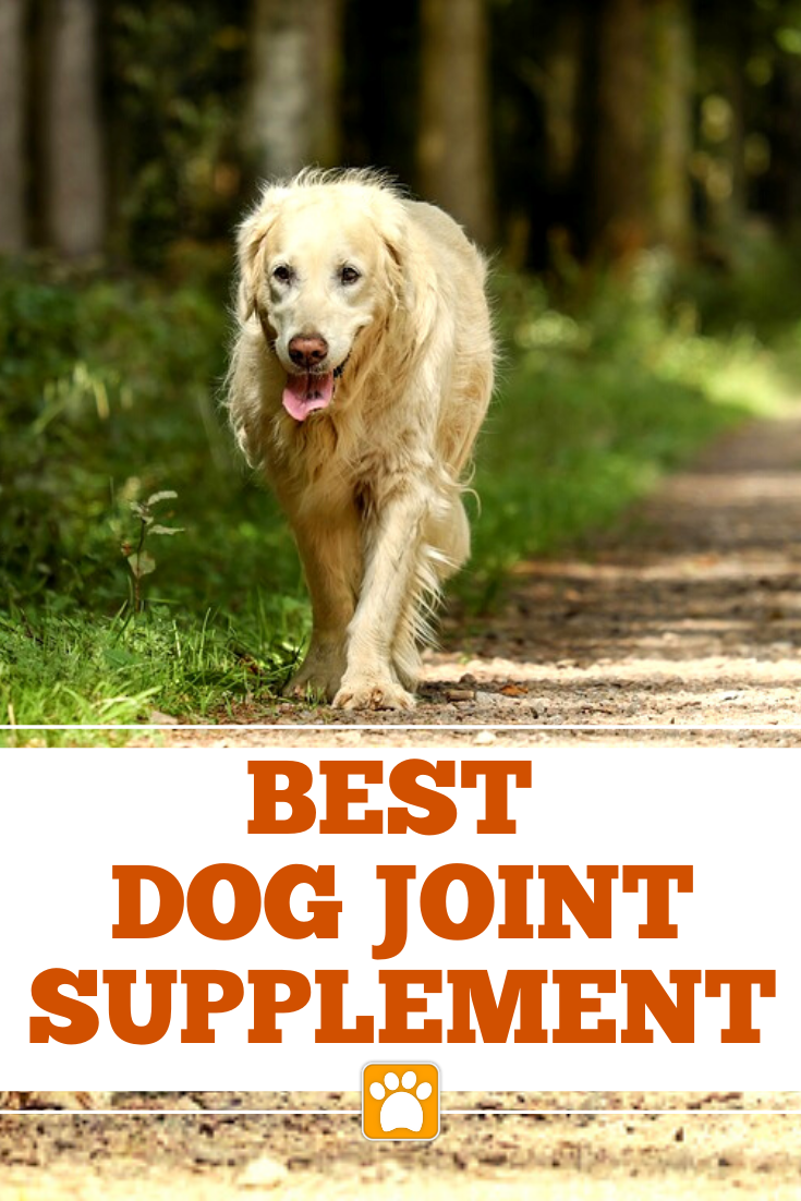 Guide Dog This Presentation Provides Free Guide Dog And Guidance Upon Dog It Gives Extra Pet Owners Tips In 2020 Dog Joint Health Dog Joints Dog Joint Supplement