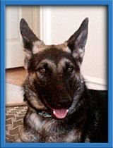 Pin By Linda Walker On Unconditional Love German Shepherd Puppies Dogs Adult Dogs