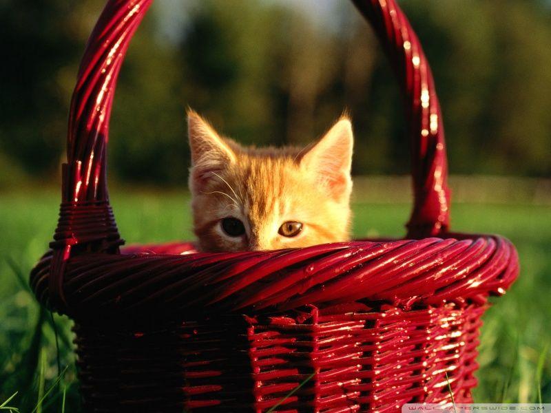 Pet clinic in Delhi provides all kinds of pet related health https://foursquare.com/user/76987574/list/pet-clinic-in-delhi