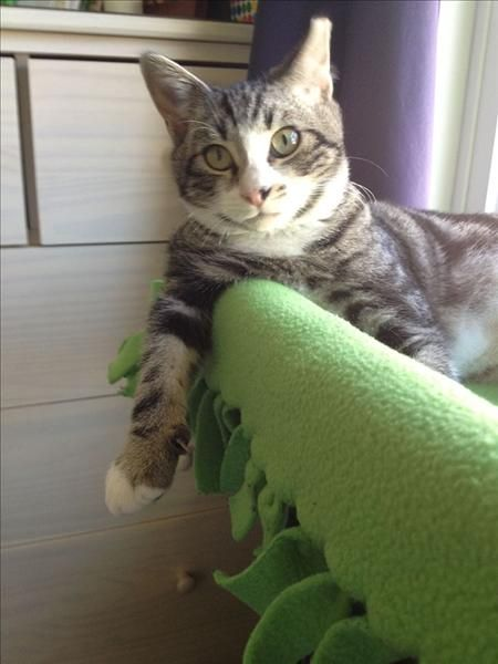 Trooper Is Cat Savvy Dog Savvy And Available For Adoption At Petco Saratoga