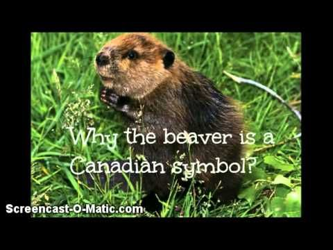 Canadian Symbols Youtube 2017 Going Global Pinterest