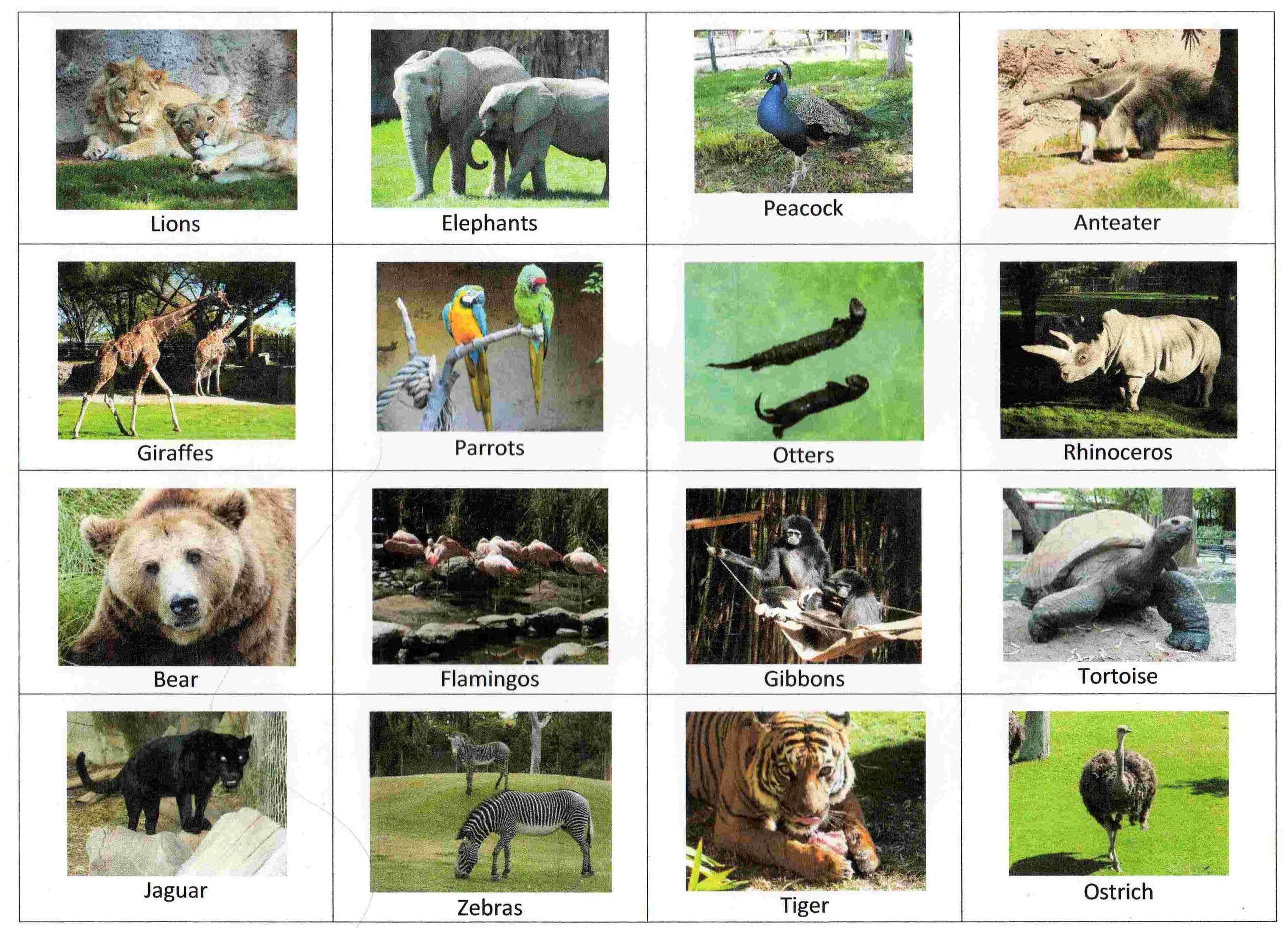Zoo Bingo Dierentuin, Bingo, Dieren