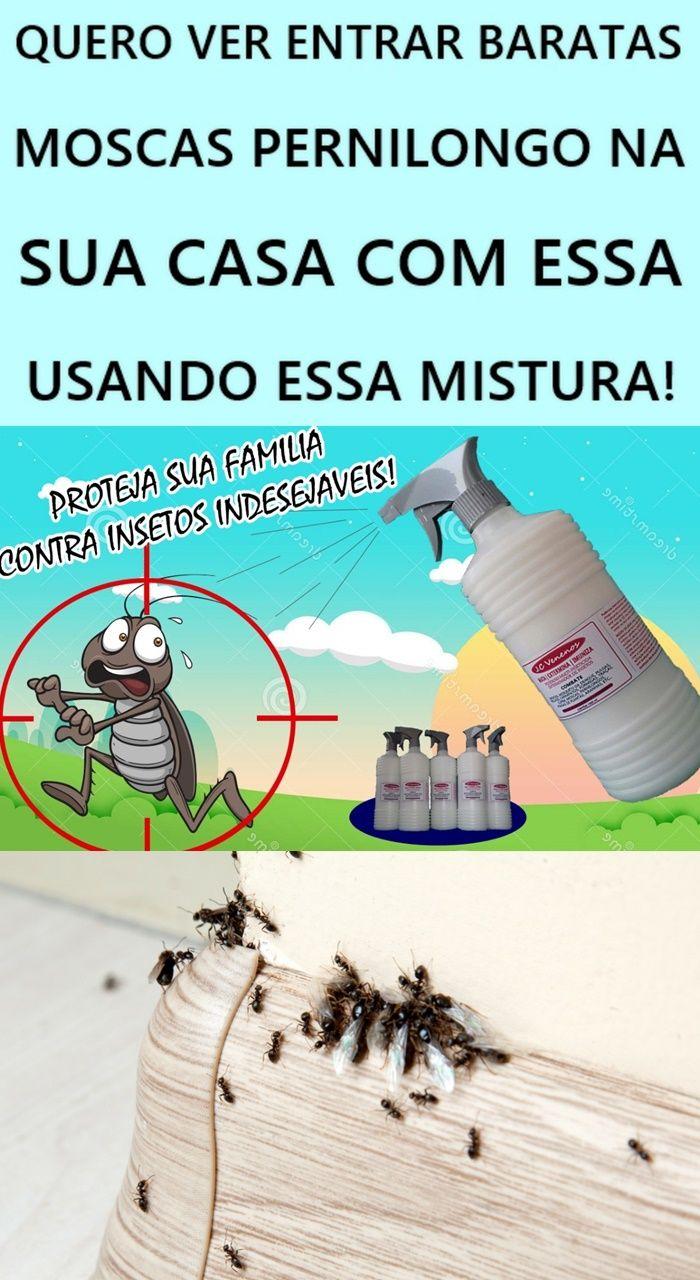 QUERO VER ENTRAR BARATAS MOSCAS PERNILONGO NA SUA CASA COM ...