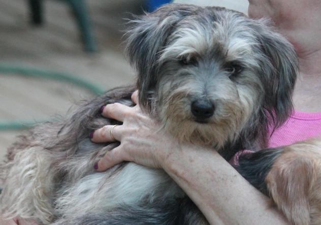 Adopt Kingston On Petfinder Dog Adoption Bedford Hills Pets