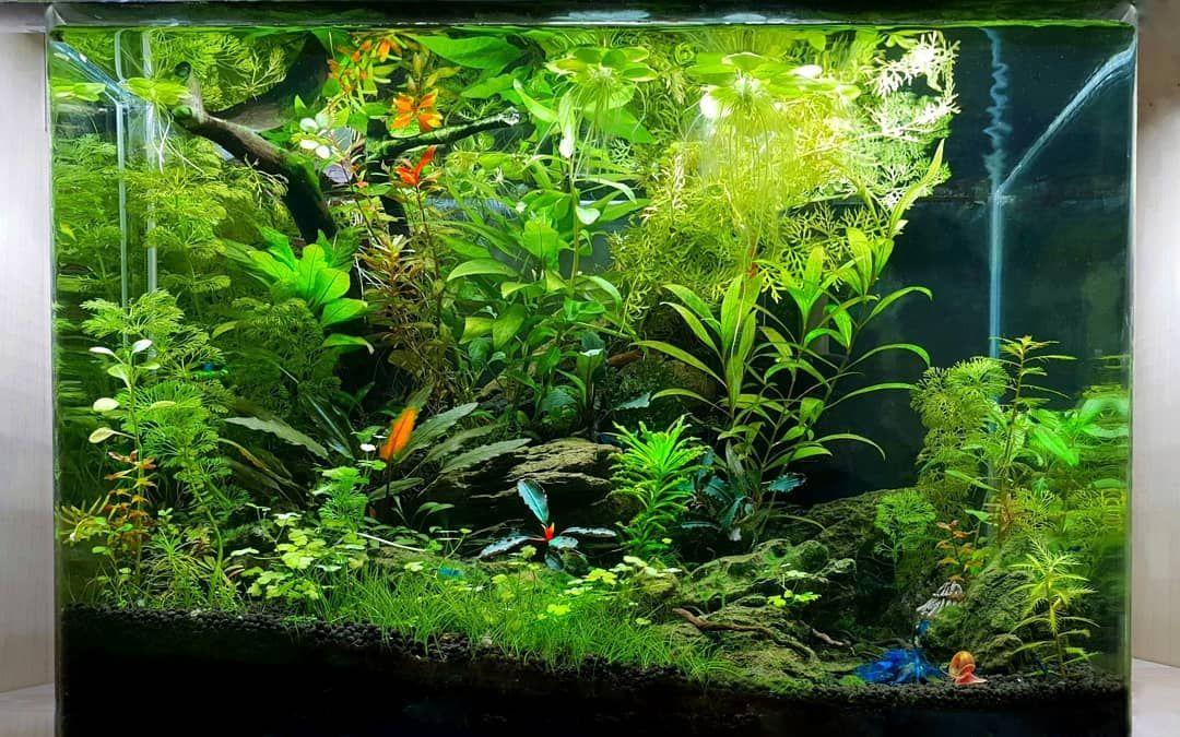 Shrimp Tank In 2020 Planted Aquarium Shrimp Tank Nature Aquarium