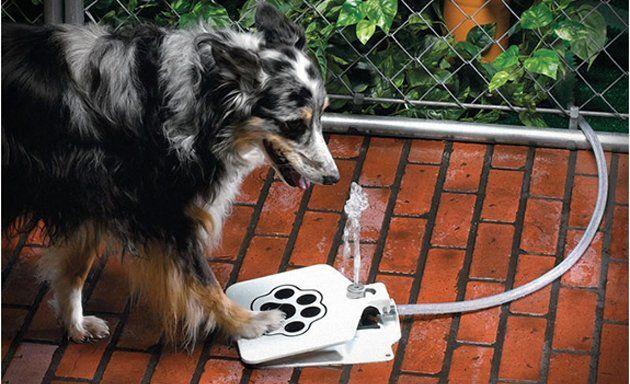 Fuente para perros listos. El mio no creo que consiguiera beber