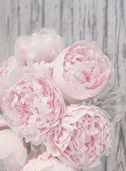 pink peonies traumhafte blumen pinterest blumen pfingstrosen und sch ne blumen. Black Bedroom Furniture Sets. Home Design Ideas