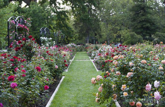 Mckinley Park Rose Garden East Sac Mckinley Park Sacramento