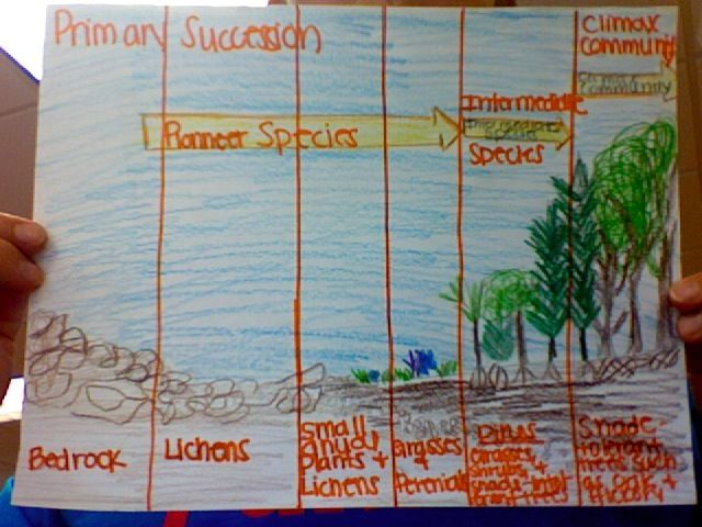 Mrswolfgang smith and mcgee succession activity also best middle school science images rh pinterest