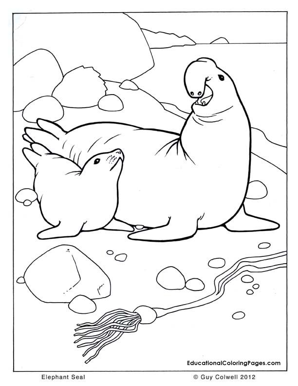 Seal Coloring Sea Animals Coloring Ocean Animals Coloring Ocean Coloring Pages Animal Coloring Pages Coloring Pages