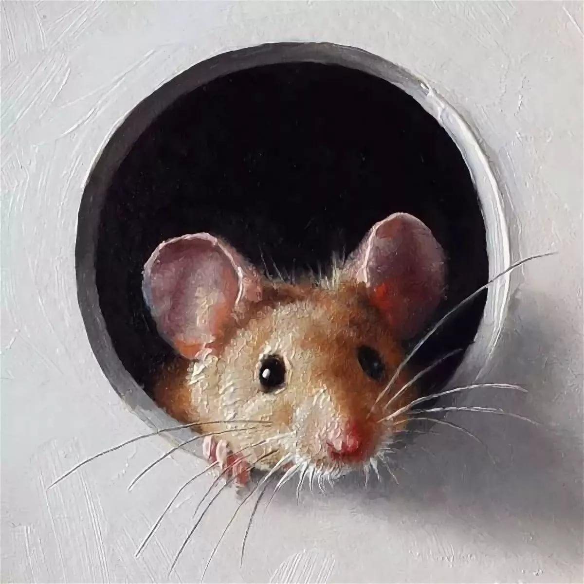 это картинки из жизни мышек этом видео