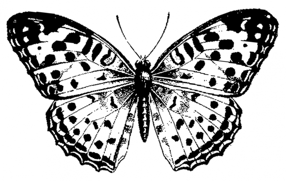 Butterfly 1 Butterfly black, white, Butterfly images