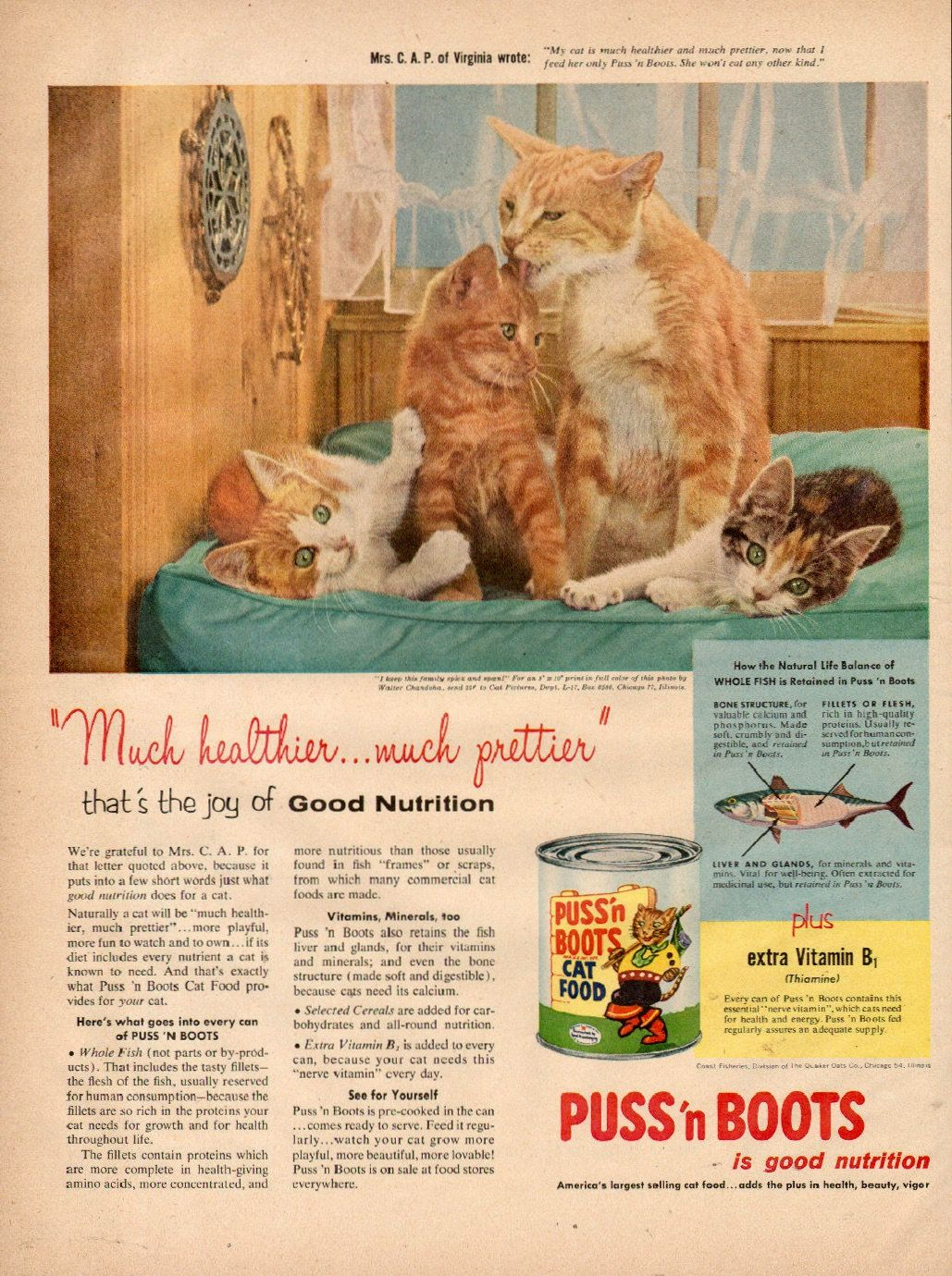 Pin By Melissia Stark On Cats In Advertising Funny Vintage Ads Retro Ads Vintage Ads