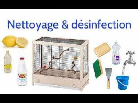 Comment nettoyer une cage ou une volière pour oiseau