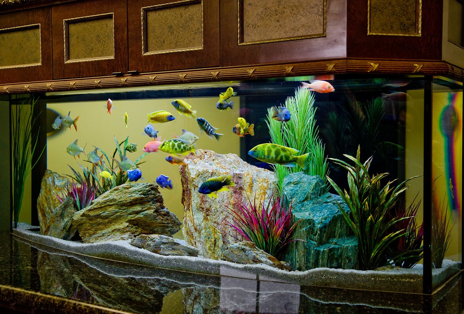 Stress free freshwater aquarium fish fifty100 com for Aquarium decoration design