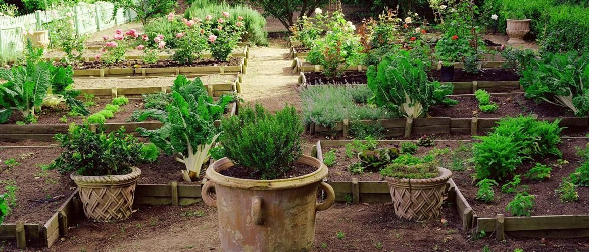 pots and raised vegetable garden