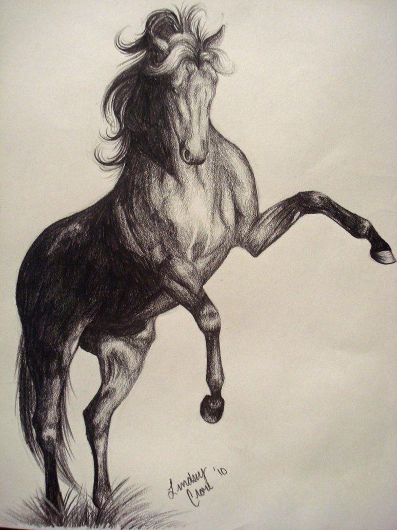 Pencil Drawings Of Horses  Pencilrearing Horse: By Peabluejr