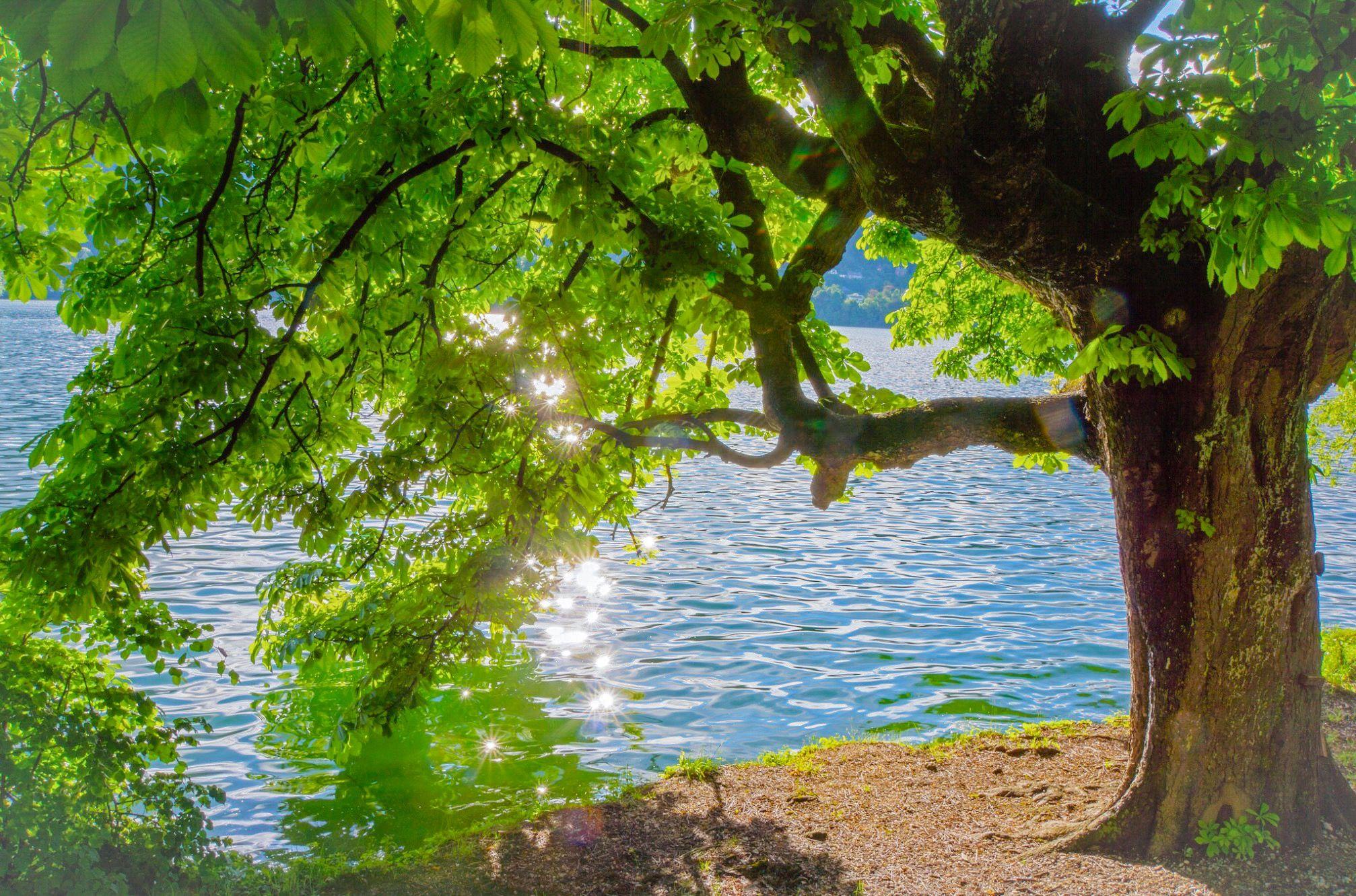 Sun Sparkles Lake Bled Radovljica Slovenia By Renate Dodell Beautiful Tree Tree Wallpaper Hd wallpaper lake tree trunk mountain