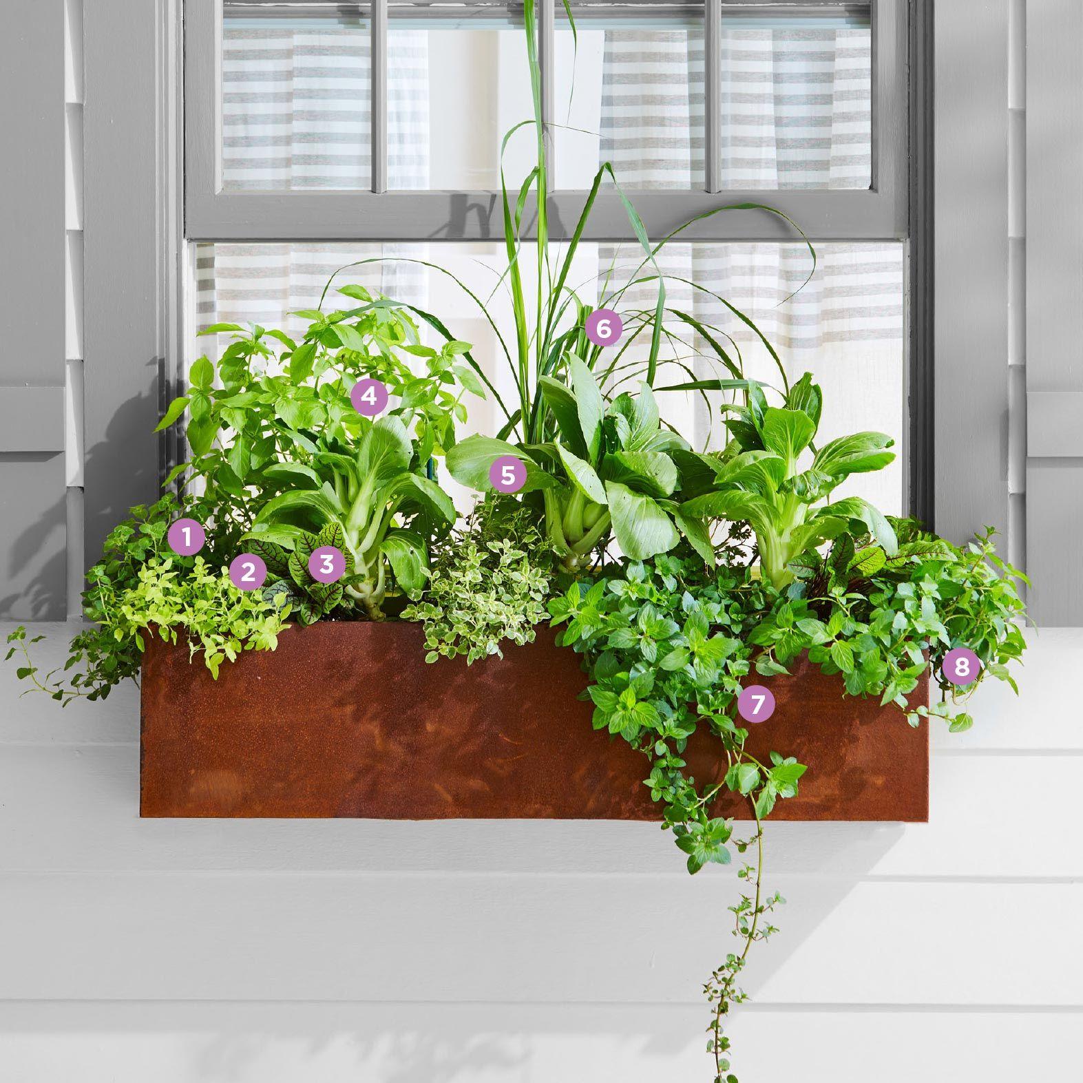 3 Great DIY Window Box Ideas Window planter boxes, Fall