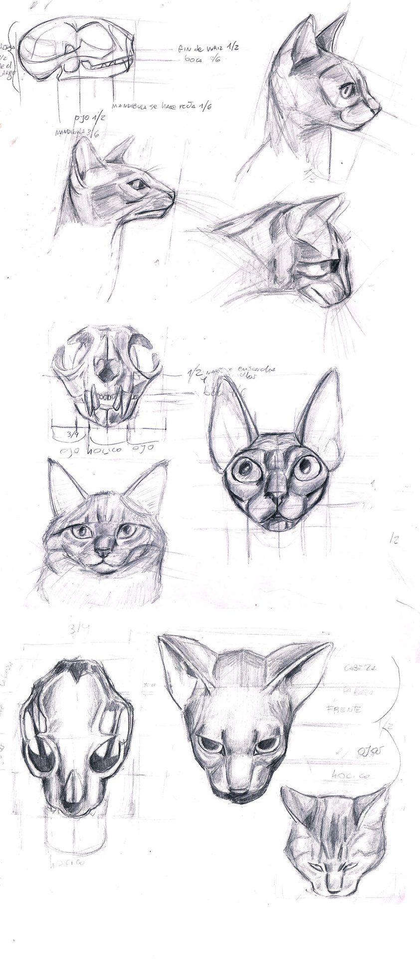 kitty cat drawing art cats draw kitten house kitteh feline paws ...