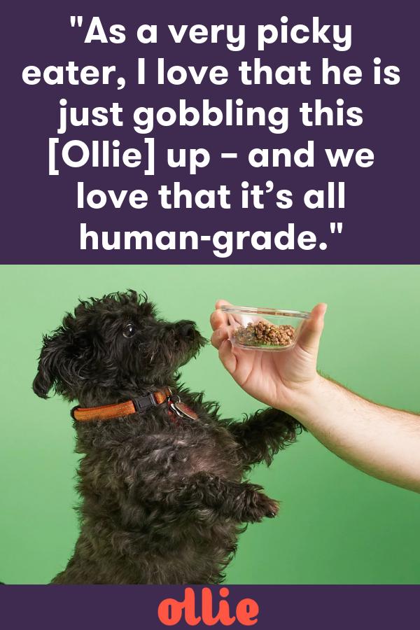 Ollie Ollie, Healthy dog food recipes, Food animals