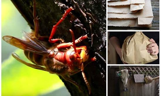 Keep Wasps Away With a Brown Paper Bag
