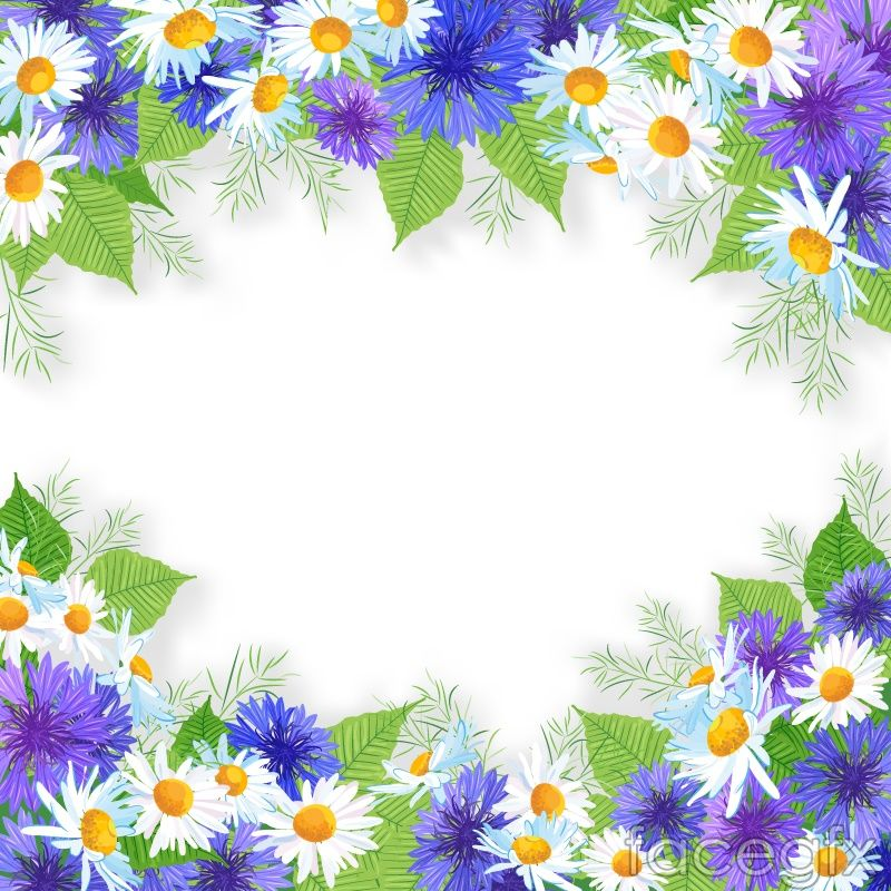 white and purple chrysanthemums border design vector for