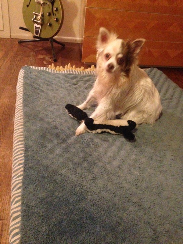 Lily on Mac's bed with her first toy from 2000 ~ a stuffed Skunk sprayed with Daddy's Chanel Gardenia Cologne