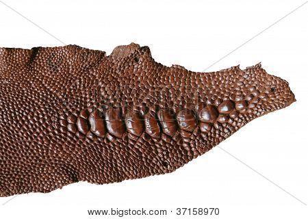 Crocodile Skin Poster With Images Crocodile Skin Skin Crocodile