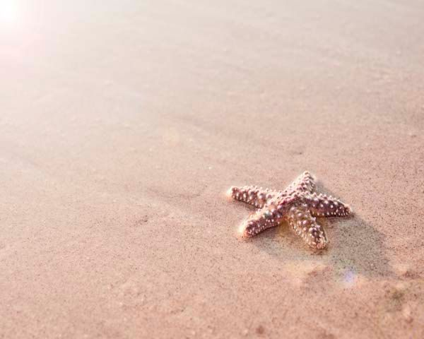 Summer Photography-Beach Home Decor, Starfish, Sand, Sun, Simple, Minimalist ,Beige, Nude -Neutral Room Decor 8x10.