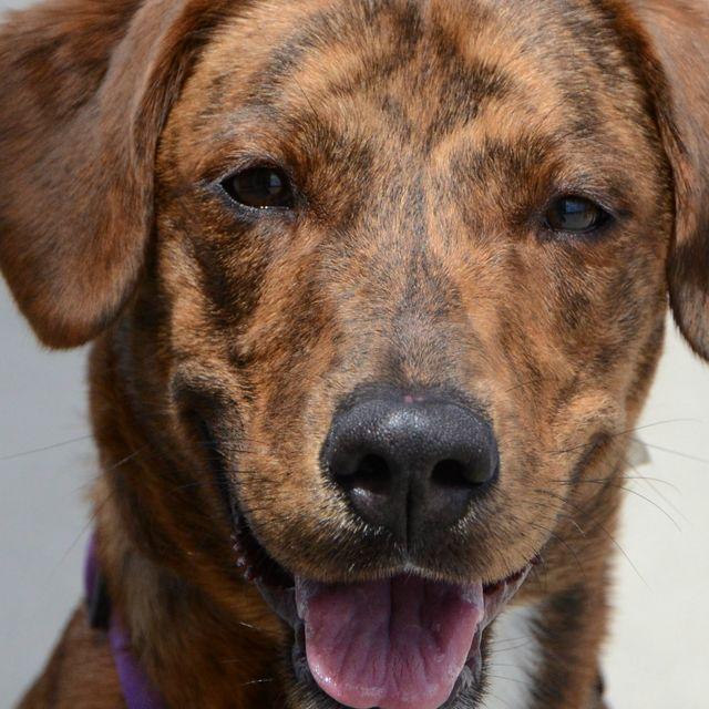 Morris County News And Events Calendar Dog Adoption Dog Adoption Event Shelter Dogs