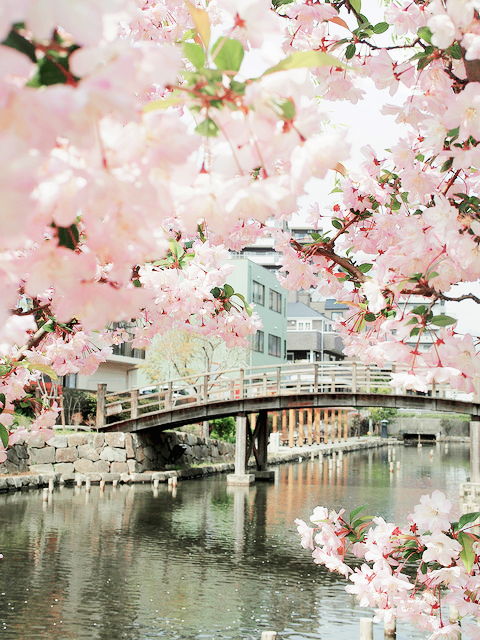 Sannasundberg Yumehiime Tumblr Com Beautiful Via Tumblr Pa We Heart It Beautiful Cherry Blossom Nature