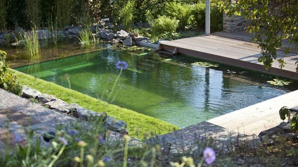 The Biotop Natural Pools Non Chlorine Alternative Using Plants To Clean The Water House