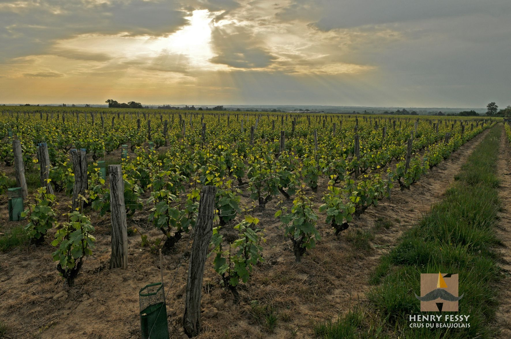 Brouilly, one of the vineyards of winemaker Henry Fessy