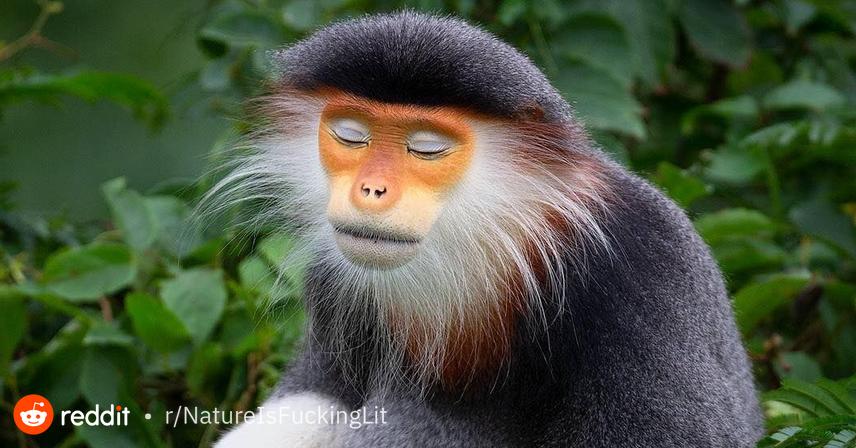 Pin by Teresa Hunt on monkeys Endangered, My animal