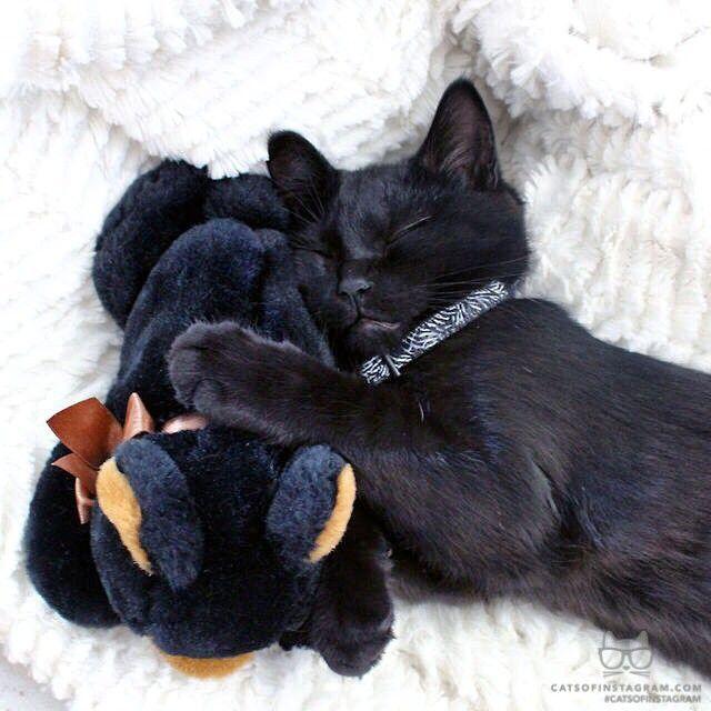 černá kočička psí styl nahý gis