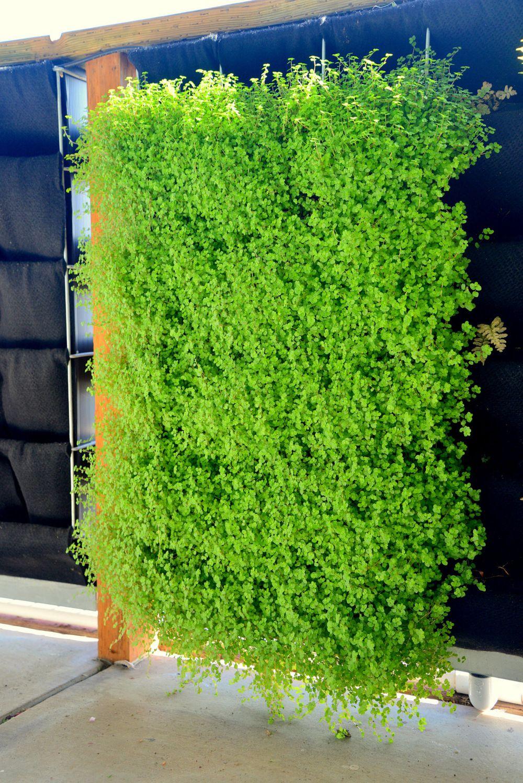 Resultado De Imagen Para Vertical Garden Jardines Verticales