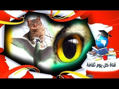 هل تعلم كيف ترانا الحيوانات مثل القطط و الكلاب او حتى الطيور ثقف نفسك Fictional Characters Character Art