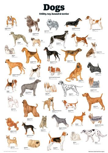 Dogs Utility Toy Hound Terrier By Guardian Wallchart Dog Breeds Chart Dog Breeds Cute Animals